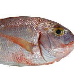 Žuvies produktai gali būti jūsų vienintelis maistas